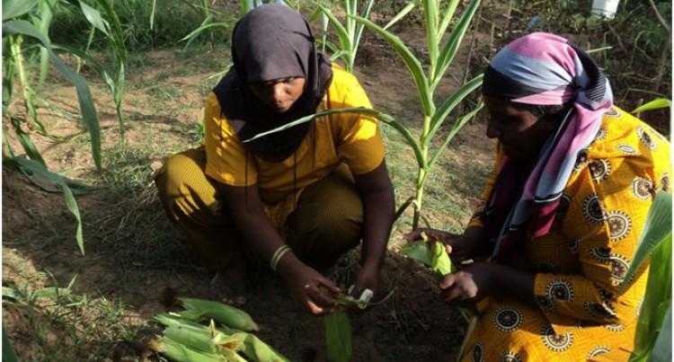 Women Build Community Resilience