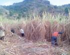 FLP: North, West Drought Critical