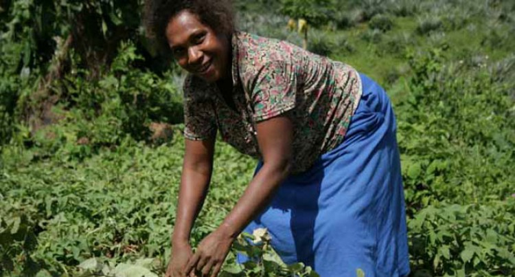 Food Security And Solomon Islands