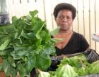 Vegetables Short At Market
