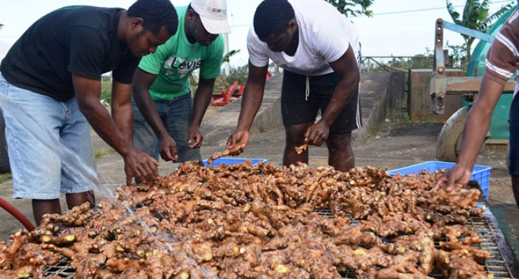 20 Tonnes Of Fresh Ginger Part Of Soft Launch Into Australia