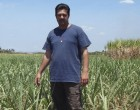Prolonged Dry Spell Affects Sugarcane Farms