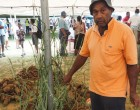 No Barriers For Food Crop Farmers