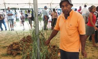 Agri Ministry Encourages Yam Farming