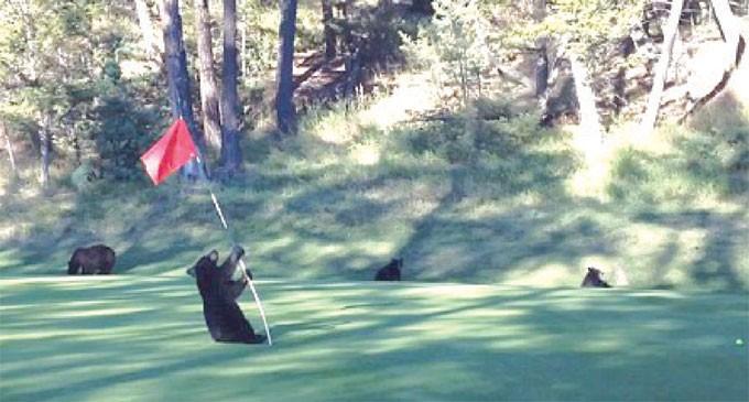 Forget Tiger, Meet Bear Woods