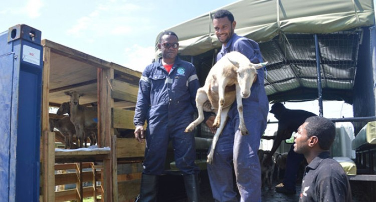 $230k Is Value Of Sheep Consignment
