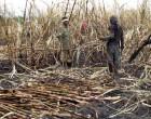 Normalised Processing At Rarawai Brings Relief