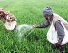 Fertiliser Subsidy Extended To Non-Sugar Farmers