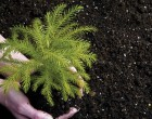 Natural Fertilizers For Your Garden
