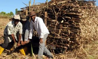 Ba Cane Growers Urged To Utilise Extended Rarawai Mill Crushing