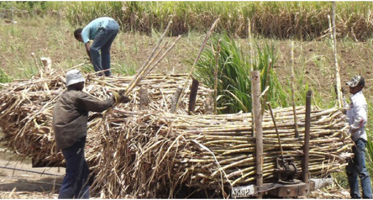 Sugar Funding For Fertiliser, Development, New Crop And Cultivators