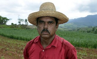 Farmer Discovers Termites  Affecting Sugarcane Yield