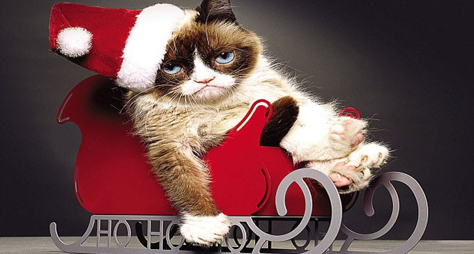 Grumpy Cat Makes £64million For Its Owner