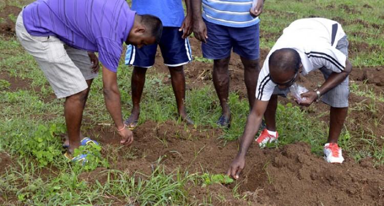 Alliance Promotes Veggie Farming