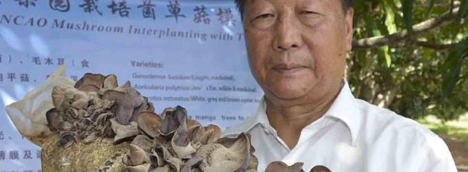 Mushroom Grows  Well In Nadi