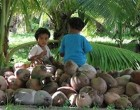Rotuma Next Stop For Island Importers