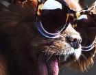 Beloved Toothless Dog Lands Her First Major Fashion Campaign