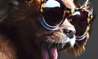 Beloved Toothless Dog Lands Her First Major Fashion Campaign