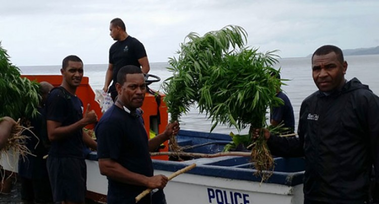 More Drug Find In Kadavu