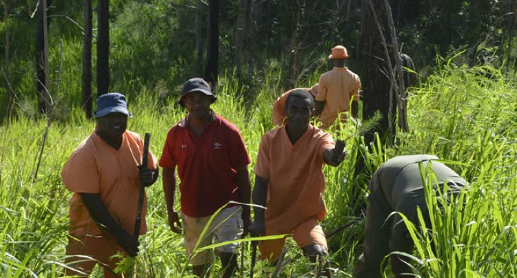 2.8 million Pine Seedlings Targeted For Planting
