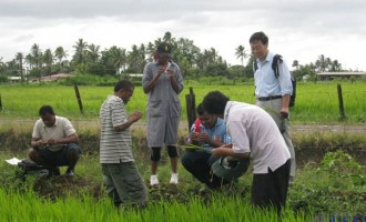 Chinese Experts To Lead $10m Rice Project