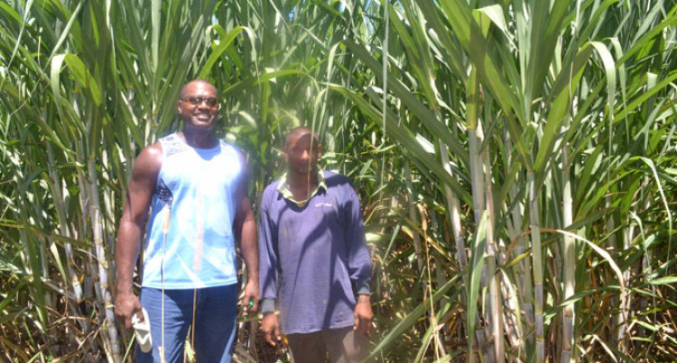 Aglime Improves Farmer's Yield