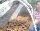Chang Seeks Mushroom Set Up On Suva Side