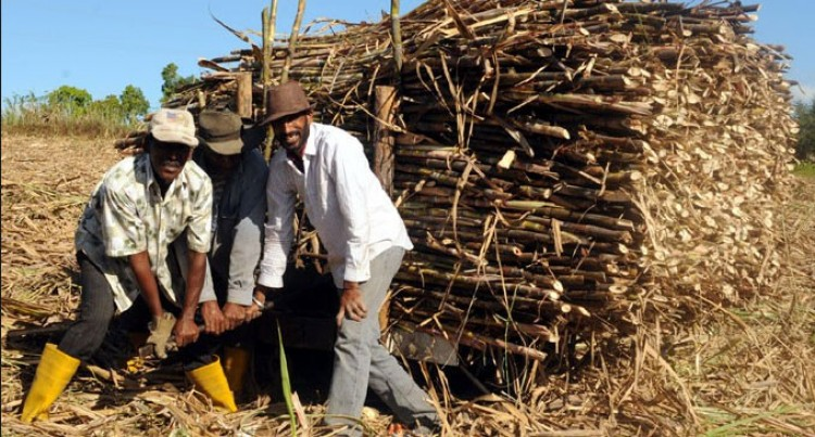 Cane Growers Back Govt Package