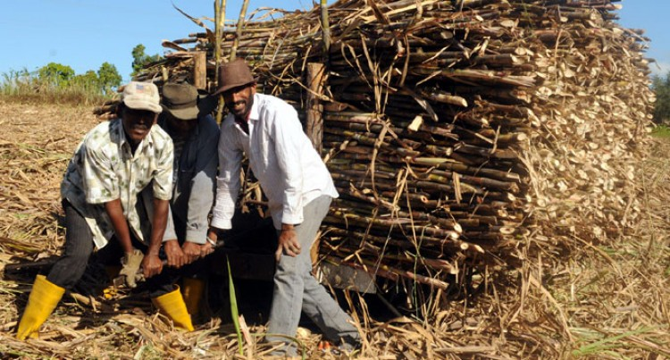 Govt Warns Sugarcane Producers, End Squabbling Or Be Left Behind