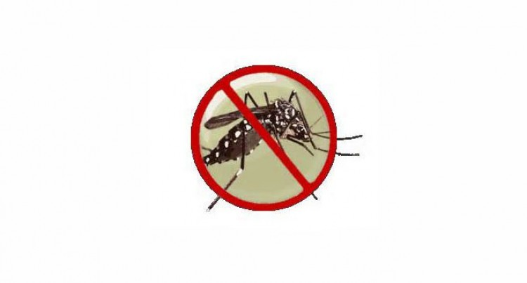 Village Ups Dengue Fight