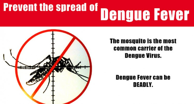 Dengue Fight Up North