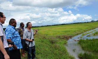 Govt Push To Cut Big Rice Import Bill