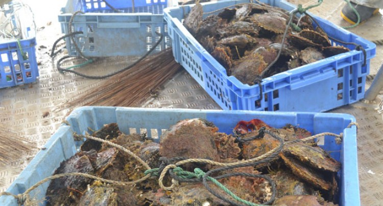 Youths Invest In Aquaculture