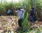 3DC Offered Land By Matanisiga Clan For Sugarcane Farming