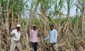 Farmers Urge Removal Of Politics