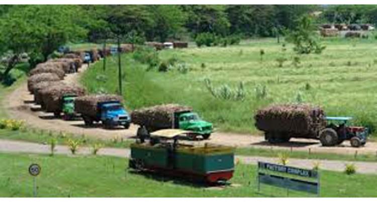 Labasa Mill Ready For Cane Crushing  Season