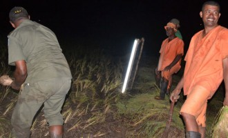 Time Change In Rice Farming