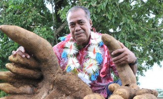 Farmers Prepare For  Rotuman Day Yam Contest