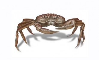 Crab Company To Release Crablets