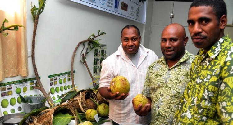 Breadfruit Expansion Encouraged
