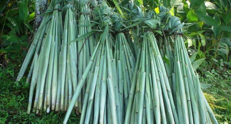 Duruka Export High In Demand