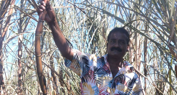 Cane Farmers Warned Ahead Of Crushing Season