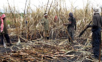 Preventing Sugarcane Burning