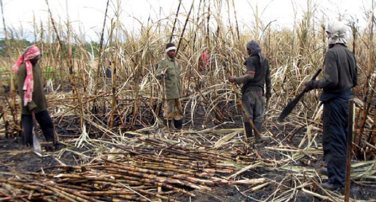 Preventing Sugarcane Burning