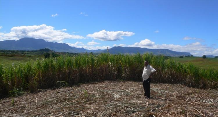 Association Helps Labasa Farmers