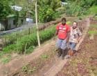 Hot Springs Hotel In Savusavu Goes Organic