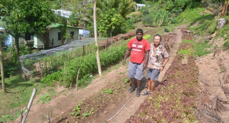 Hot Springs Hotel In Savusavu Goes Organic
