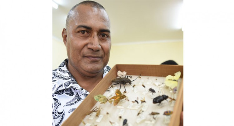 Insect Museum Opens