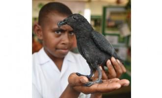 Nature Fiji Targets Invasive Species