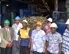 Penang Mill Targets 195,000 tonnes Cane Crush